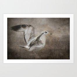 Dance of the Lone Gull Art Print
