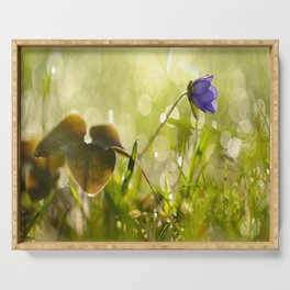 Beautiful spring - first flower little anemone with beautiful bokeh in green background Serving Tray