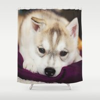 husky Shower Curtains featuring husky puppy. by lissalaine