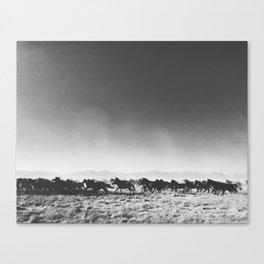 Wild Mustangs Canvas Print
