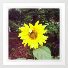 Winking Sunflower Art Print
