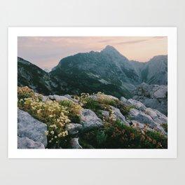 Mountain flowers at sunrise Art Print