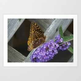 Butterfly Portrait Art Print