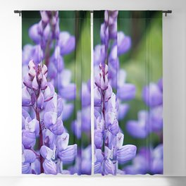 Wild lupine Blackout Curtain