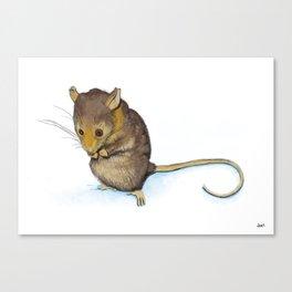 Mountain Pygmy-possum (Burramys parvus) Australian Native Canvas Print