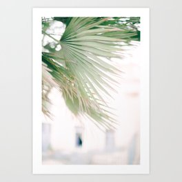 Santorini 0028: Palm, Santorini, Greece Art Print