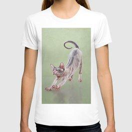 Sphynx kitten T-shirt