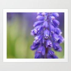 Violet Buds Art Print