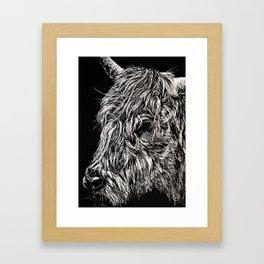 West Highland Cattle Scratch Art, High Park Zoo Framed Art Print