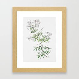 Jasmine Flower Illustration Framed Art Print