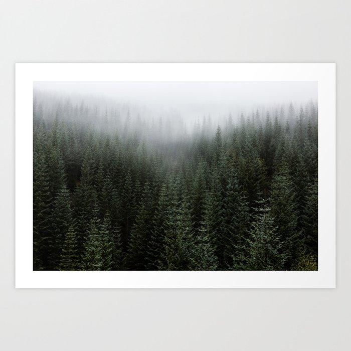 Dizzying Misty Forest Kunstdrucke