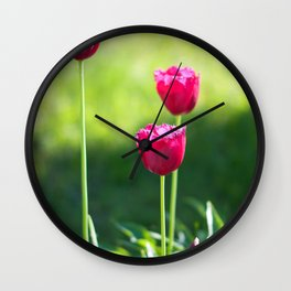 Three pink tulips Wall Clock