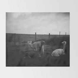 Alpaca/llama paddock Throw Blanket