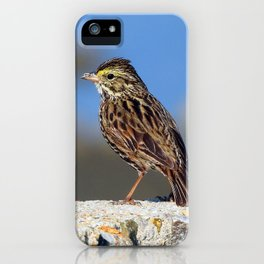 Male Savannah Sparrow iPhone Case