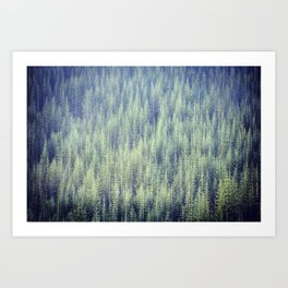Noble Fir Blur Art Print