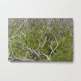bushfire trees Metal Print