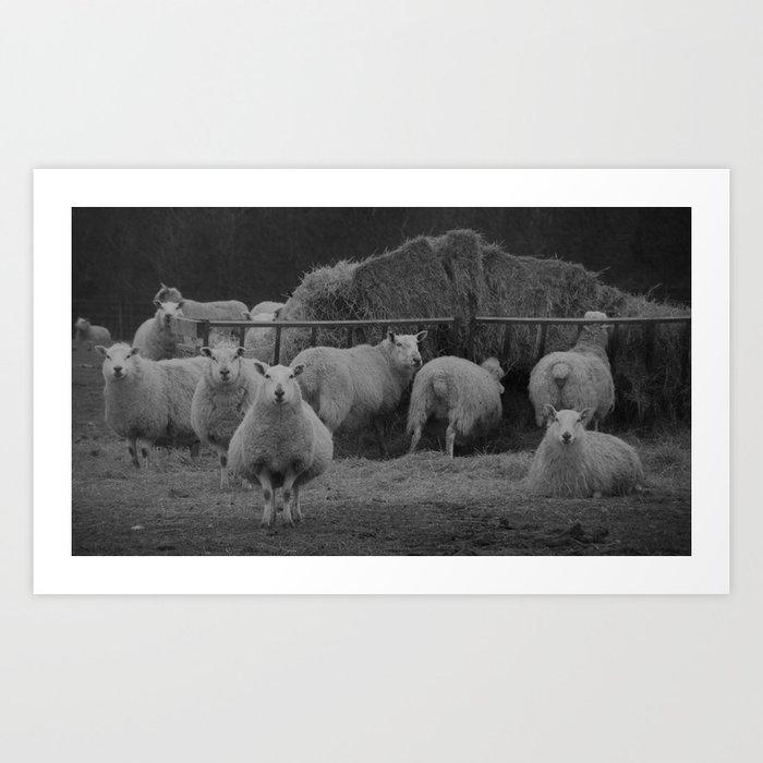 observant, vintage sheep... Art Print