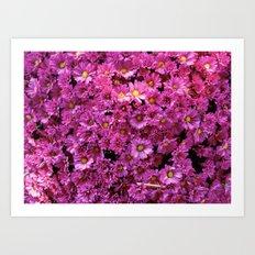 Pink  Flurry Art Print