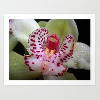 orchid Art Prints featuring Orchid by Vitta