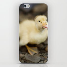 Duckling iPhone Skin