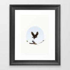 Aquila audax fleayi 'Wedge-Tailed Eagle' Framed Art Print
