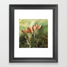 Rose hips Framed Art Print