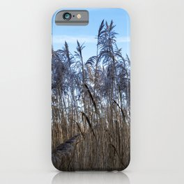 Amongst the Reeds iPhone Case