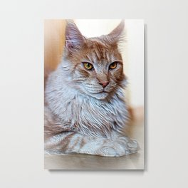 Nugget the golden main-coone-cat Metal Print