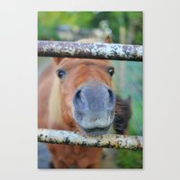 pony Canvas Prints featuring Pony by Blown A Wish Photography