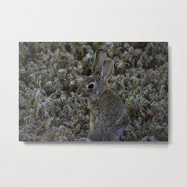 Wild hare Colorado Metal Print