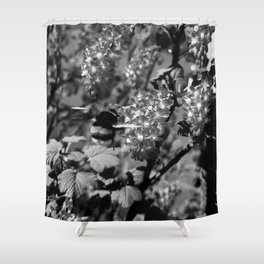 Bumble Bee and Blood Currant Ribes Sanguineum bw Shower Curtain