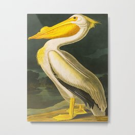 White Pelican John James Audubon Scientific Vintage Illustrations Of American Birds Metal Print
