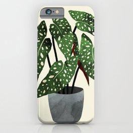 begonia maculata interior plant iPhone Case