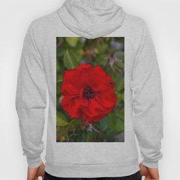 Vibrant Red Flower Hoody