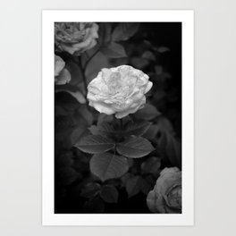 Everything is Roses Art Print