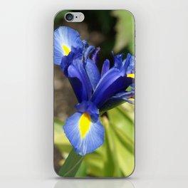 Blue Iris Flower - Blue, Yellow, Green iPhone Skin