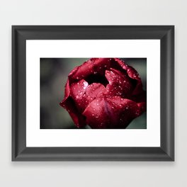 Tulip Close Framed Art Print