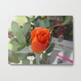 Orange Rosebud Metal Print