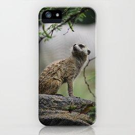 Meerkat 1 iPhone Case