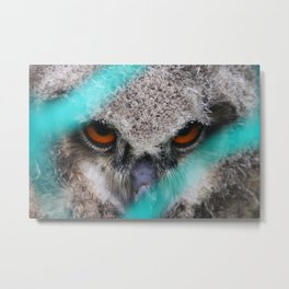 eyes of fire, young bird of prey portrait Metal Print