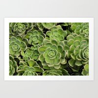 succulent Art Prints featuring Succulent by Cynthia del Rio