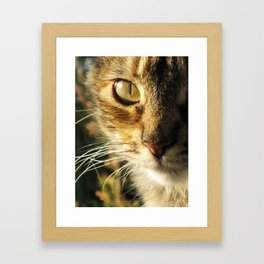 Concha Framed Art Print