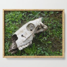 Skull in a field, Photography, animal skull Serving Tray