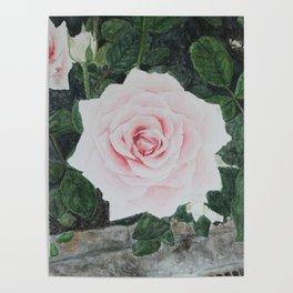 Katie's Rose Poster