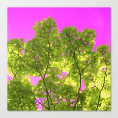 green and pink II Canvas Print
