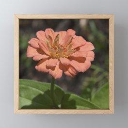 Jane's Garden - The Peachy Orange Flower Framed Mini Art Print