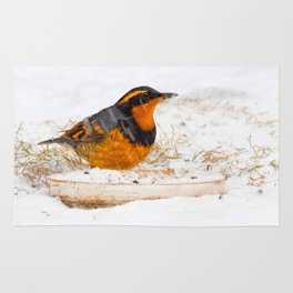 Varied Thrush in the Snow Rug
