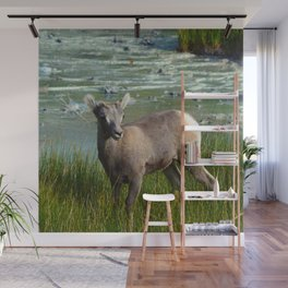Baby big horn sheep in Jasper National Park Wall Mural
