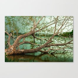 Wandering Branches Canvas Print