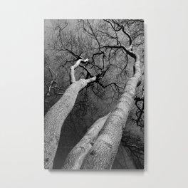 Monochrome Trees Metal Print